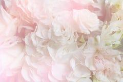 Красочный сладостный букет цветка изолированный на предпосылке closeup Стоковое Фото