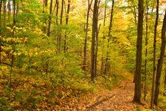 Красочный след в древесинах Стоковое фото RF