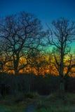 Красочный след дуба Стоковые Изображения