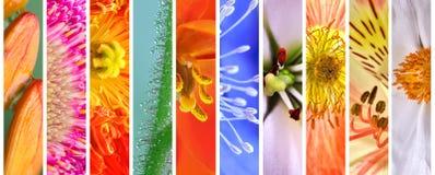 Красочный флористический комплект весны и лета Стоковые Фотографии RF