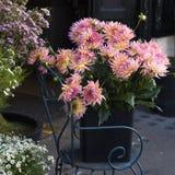 Красочный цветок георгина Стоковое Фото