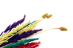 Красочный цветок на деревянных предпосылках Стоковые Изображения