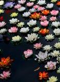 Красочный цветок лотоса в реке стоковые изображения rf