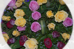 Красочный цветок Розы для валентинки, партии, годовщины, decorati Стоковое фото RF