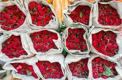 Красочный цветок розы Стоковое Изображение