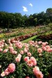 Красочный цветочный сад в Градусе Фаренгейта Luang Mae, Chiang Rai, Таиланде Стоковые Изображения RF