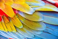 Красочный яркий конец вверх ярких экзотических пер птицы попугая ары шарлаха стоковые изображения rf