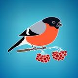 Красочный Bullfinch на голубой предпосылке Стоковое фото RF