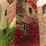 Красочный creeper в фасаде Стоковое Изображение
