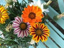 Красочный gazania цветет предпосылка Стоковое фото RF