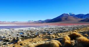 Красочный Laguna Colorada, Салар de Uyuni, Боливия стоковая фотография
