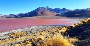 Красочный Laguna Colorada, Салар de Uyuni, Боливия стоковое изображение