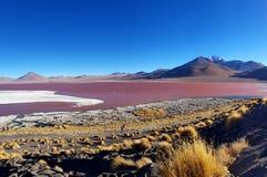 Красочный Laguna Colorada, Салар de Uyuni, Боливия стоковые фотографии rf