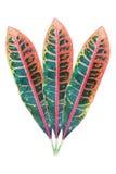 3 красочных листь изолированного на белизне Стоковая Фотография RF