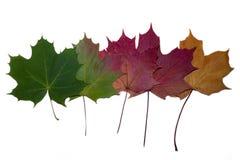 5 красочных листьев осени стоковая фотография