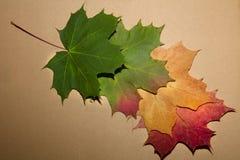 5 красочных листьев осени стоковые фотографии rf