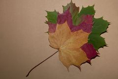 5 красочных листьев осени стоковая фотография rf
