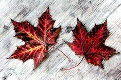 2 красочных листь осени на деревянном субстрате Стоковое Изображение RF