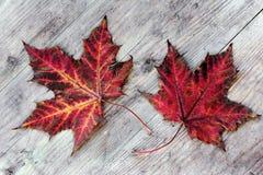 2 красочных листь осени на деревянном субстрате Стоковое Фото
