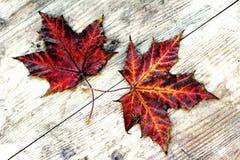 2 красочных листь осени на деревянном субстрате Стоковые Изображения RF