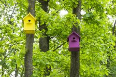 2 красочных birdhouses на лесе деревьев весной стоковые фото