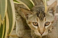 красться кота стоковое изображение rf