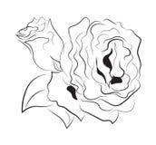 Красящ 2 роза Стоковые Фотографии RF