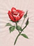 крася акварель красного цвета розовая Стоковые Изображения RF