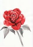 крася акварель красного цвета розовая Стоковые Фото