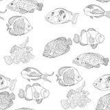 Крася безшовный хирург Sohail рыб Красного Моря картины аравийский, Стоковая Фотография