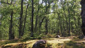 Края леса в дне лета солнечном видеоматериал