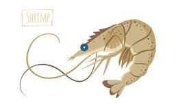 Креветка, иллюстрация шаржа вектора Стоковая Фотография RF