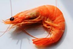 Креветка - красная малая креветка стоковое изображение