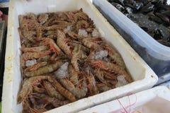 Креветка креветки Стоковые Изображения