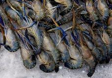Креветка, креветка, свежая креветка в ноче уличного рынка еды, свежая куча морепродуктов стоковое изображение rf