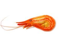 креветка Стоковая Фотография RF