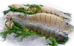 Креветка Mantis на льде с травами Стоковое Изображение RF