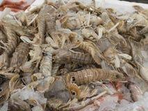Креветка Mantis для продажи Стоковая Фотография RF