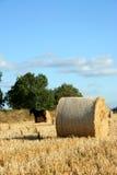 крены сена поля Стоковые Изображения