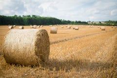 крены сена поля Стоковые Фотографии RF