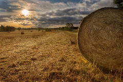 Крены сена разбросанные в поле Стоковое Изображение RF