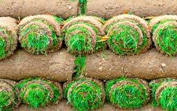 крены травы Стоковые Фотографии RF