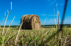 Крен сена в поле Стоковое Изображение