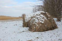 Крен сена сухой травы в поле стоковое фото rf