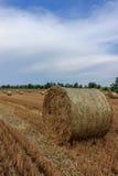 Крен соломы Стоковая Фотография