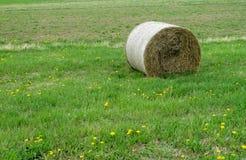 Крен стога сена лежа на зеленой траве Стоковые Изображения