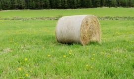 Крен стога сена на зеленой траве Стоковая Фотография