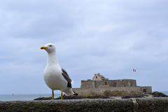 Крепость Святого-Malo Стоковые Изображения