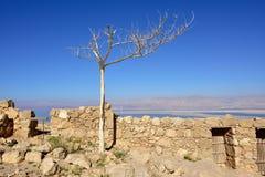 Крепость Masada, Израиль Стоковая Фотография