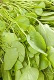 кресс-салат крупного плана Стоковое Изображение RF